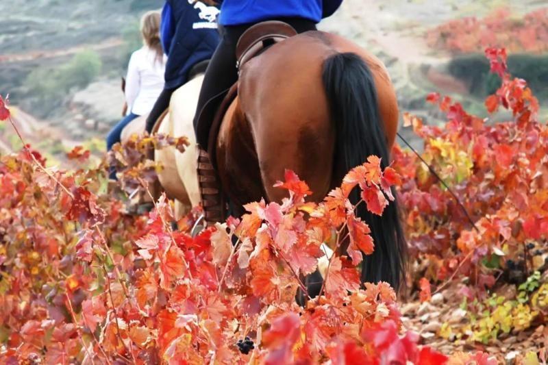 bodegas-corral-horse ridding