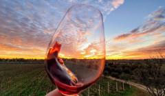 Baraka Winery - glass & vineyard
