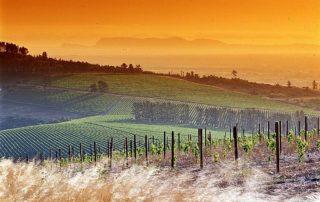 Saxenburg Estates - Sunset