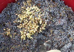Bodegas Gratias. Familia Y Vinedos - beginning of wine process