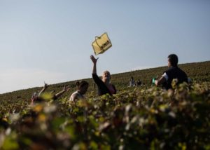 Dom Caudron Harvest Vineyards