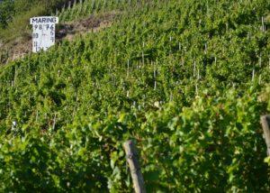 weingut-gindorf-lush-vineyards