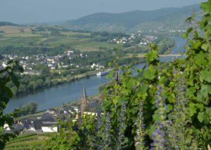 weingut-gindorf-top-view