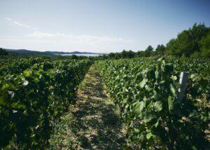 Baraka Winery - vineyard