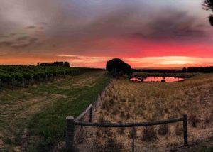 Scotchmans Hill - Sun Rise over Paddocks