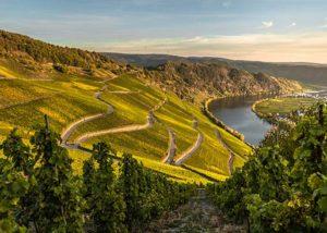 Weingut Breit_beautiful vineyard on the slopes_2