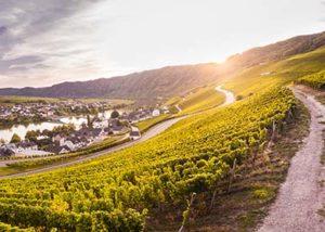 Weingut Breit_vineyard during sunset_Yes