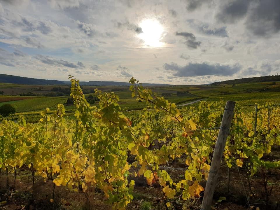 The view on the vineyard of the Weingut Hof Breitenstein