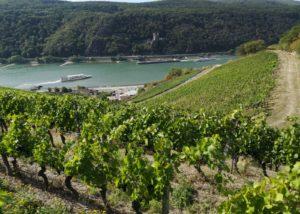 The vineyard of the Weingut Robert König next to the river