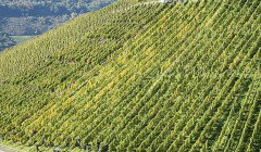 Weingut Selbach-Oster_Zeltinger Himmelreich_Yes0