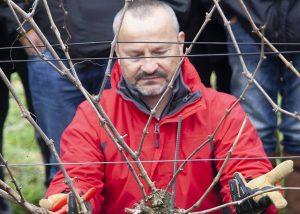 Tenuta Di Castellaro winemaker works at vineyard in Italy
