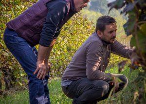 eraldo viberti winemakers inspecting grapevines in vineyard near winery