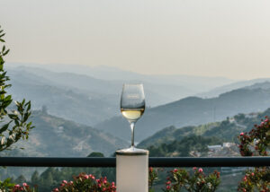 a&d wines glass of beautiful white wine ready for tasting near winery