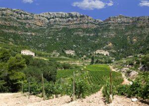 ametller slender rows of grapevines on vineyard near winery in spain