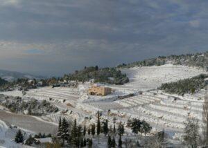 ametller snowy vineyards near winery in winter in lovely spain