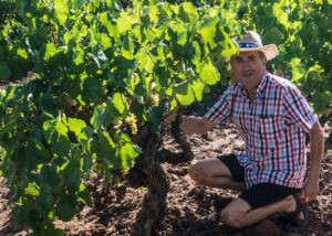 ametller winemaker amid lush vineyard near winery in lovely spain