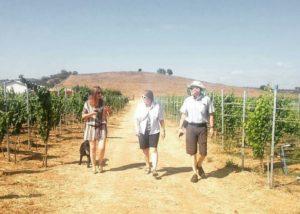 attilio & mochi three winemakers stroll through lush vineyards near winery
