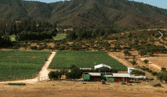 attilio & mochi amazing and lush vineyards against mountains