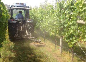 aurum wines tractor amid lush vineyards near winery in new zealand