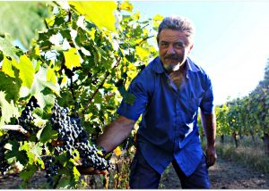 Tenuta Leonard winery owner works at vineyard reviewing grapes