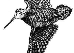 The bird named Becasse at Domaine de la Mordorée