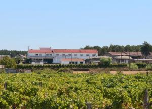 beira serra vinhos lush vineyard near winery in lovely portugal