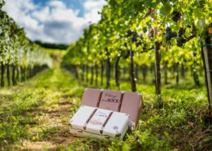 bock estate amazing and lush vineyards near winery in hungary
