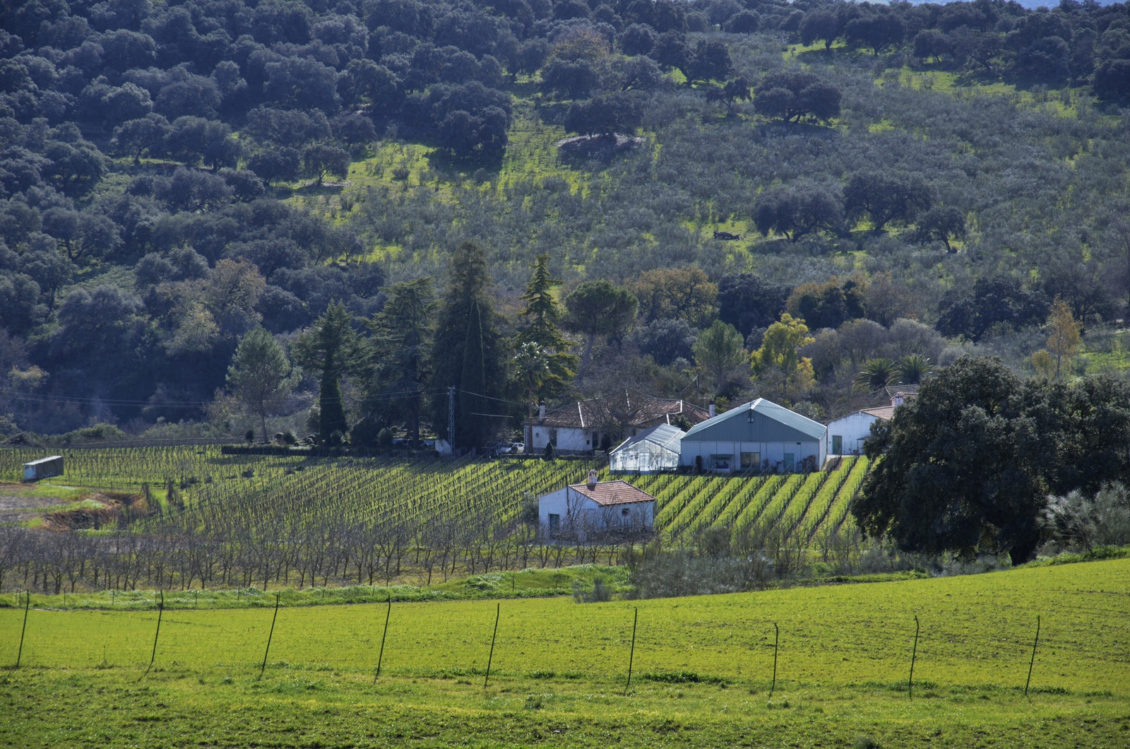 Bodega F. Schatz vineyard landscape in Spain