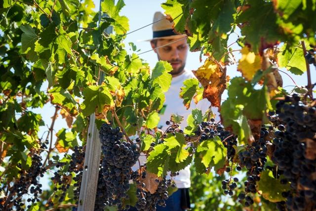 Bodega Son Juliana winemaker at vineyard in Spain