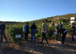 Bodegas Fernández de Piérola vineyard tour in Spain