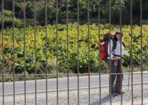 bodegas godelia tourist near beautiful winery in lovely spain