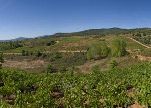 bodegas godelia amazing and lush vineyard near winery in spain