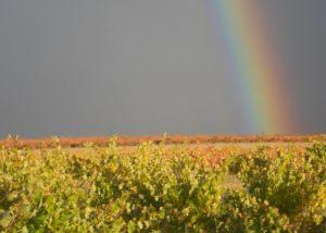 Bodegas Iturria vineyard with rainbow view during rain in Spain