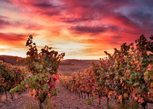 bodegas valdemar lush grapevines on vineyard near winery in spain