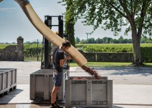 Tenuta Luisa winemaking and harvesting process in Italy