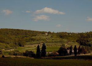 panoramic view of vineyard at Villa San Carlo winery