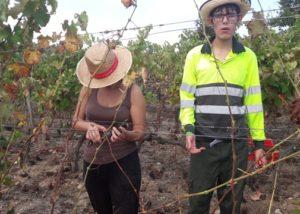 can calopa de dalt vineyard two winemakers working on vineyard near winery