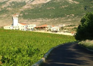 cave kouroum amazing vineyard near winery in lovely lebanon
