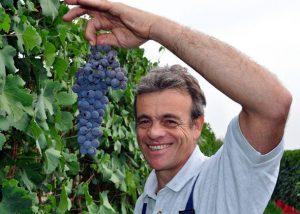eraldo viberti winemaker holding bunch of black grapes in his hands