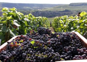 Champagne Meteyer event harvest time wine tourism