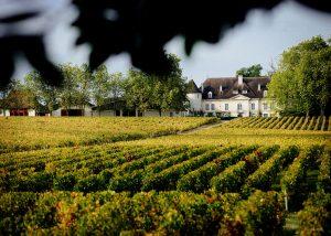 Château Bouscaut - vineyard landscape