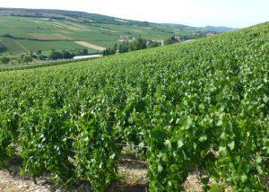 Château de la Greffière vineyards