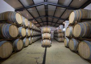 Many wooden barrels for aging wine in the cellar Fattoria Carpineta Fontalpino.