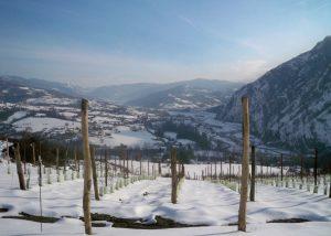ezio poggio beautiful vineyard near italian winery in winter
