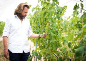 Winemaker examines grapes in the vineyard in the winery La Collina dei Ciliegi.