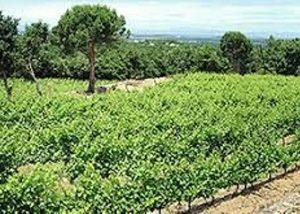 Domaine Deprade Jorda - beautiful vineyard landscape
