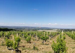 Domaine des 3 Cellier - Vineyard landscape