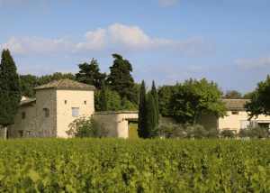 The vineyard with a blue sky at Mas Caron