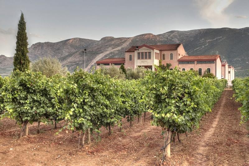 domaine skouras lush and amazing vineyard against great estate
