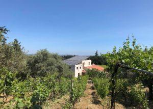 dourakis winery slender rows of grapevines on vineyard near winery